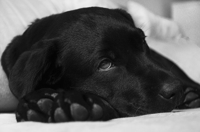 BREAKING NEWS – CANINE INFLUENZA OUTBREAK.