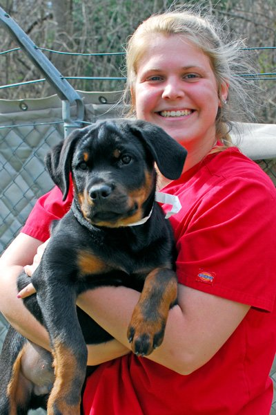 Arnold Staff Comforting a Dog