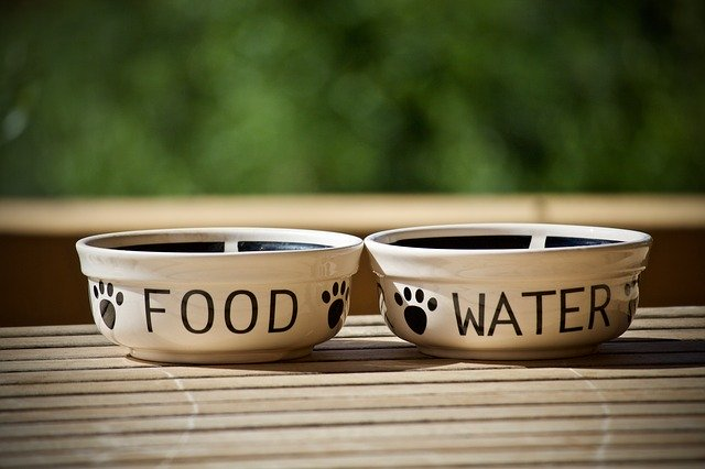 Bland Diet for Dogs: Tips for Feeding Your Pet